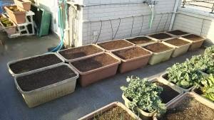 ジャガイモの植付