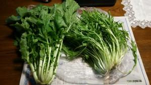 みよし菜(左)と水菜(右)