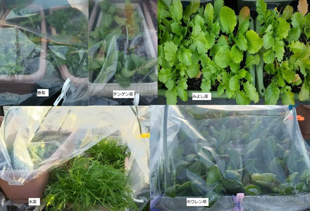 冬野菜・各種