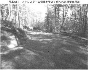 理想的な林道_日本林業は蘇る
