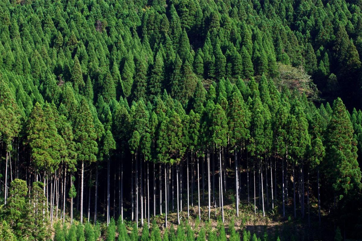 森林経営管理法が成立しました!