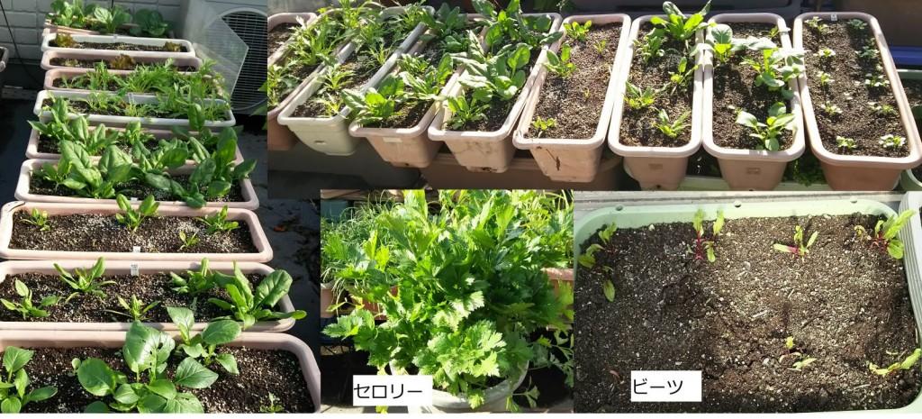 秋・冬野菜_11月7日