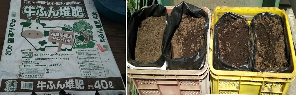 牛糞堆肥の袋を使った「袋栽培」