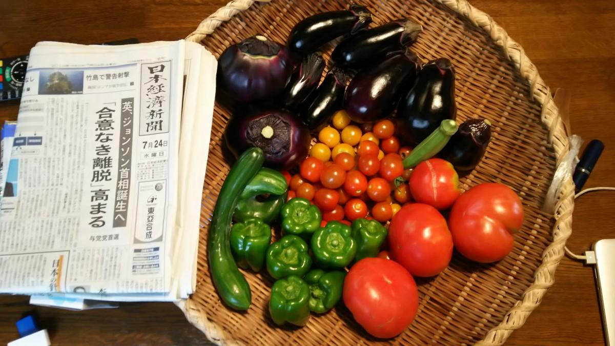7月24日夏野菜の収穫状況