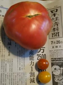 大きめのトマト