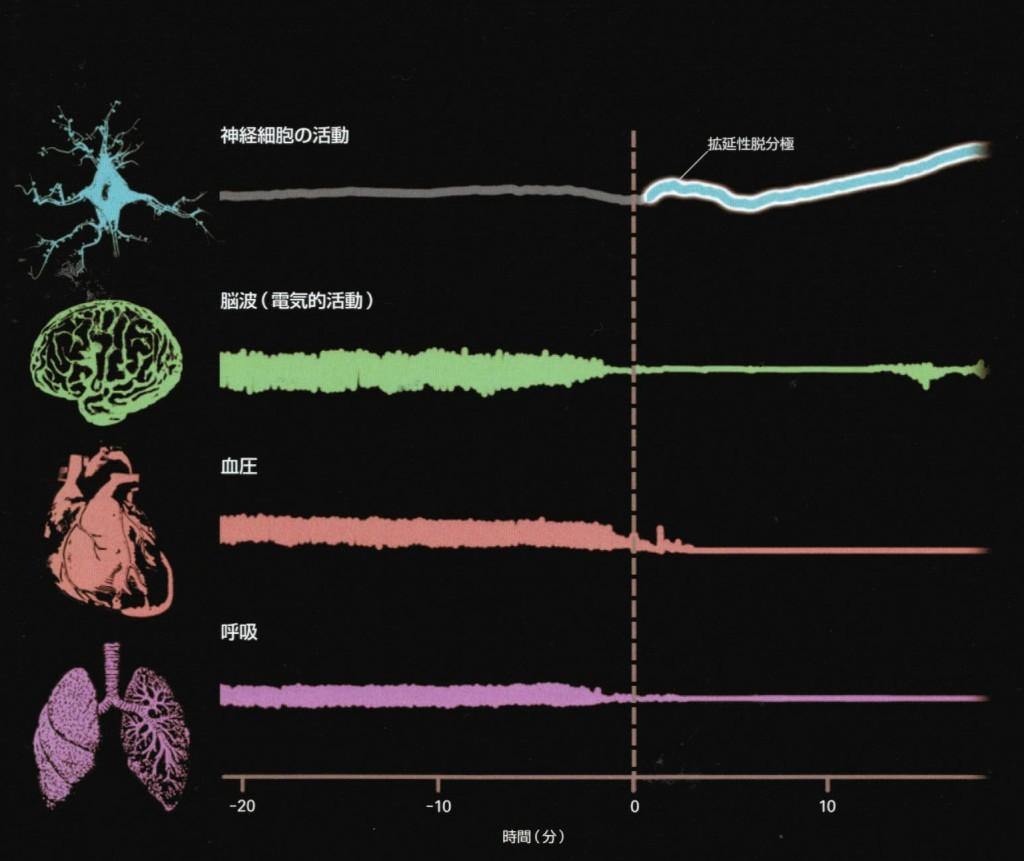 最後の脳信号