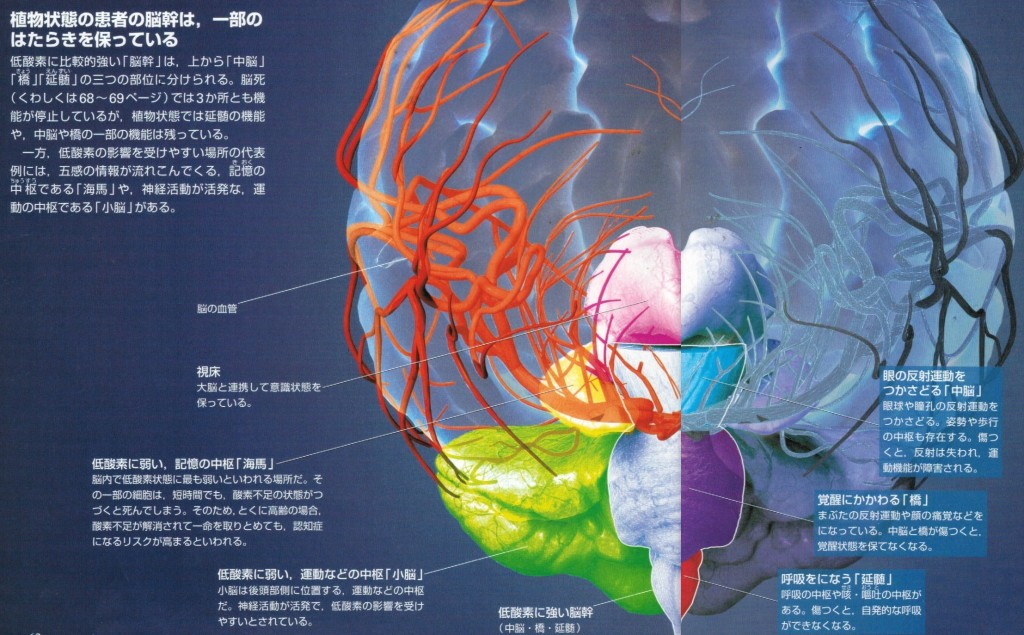 脳の各部分の働き