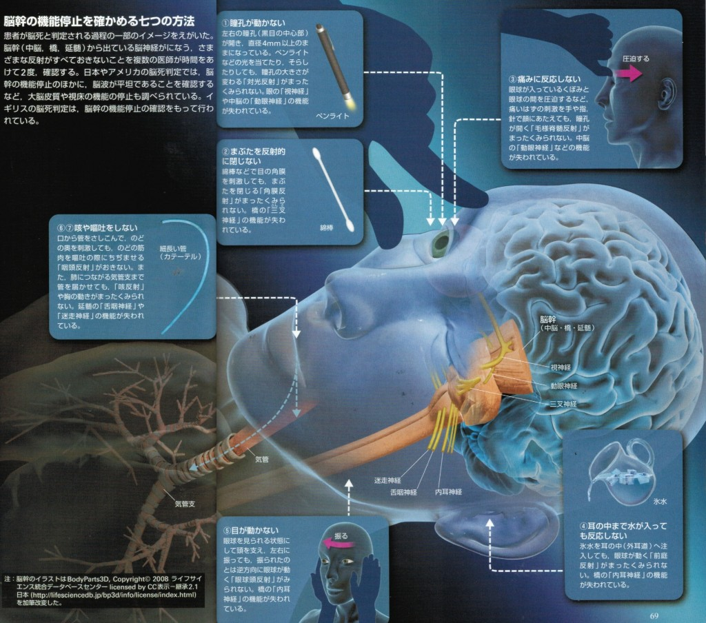 脳幹の機能停止を確かめる7つの方法