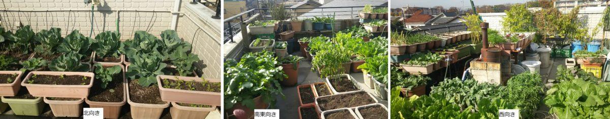 秋冬野菜の現況