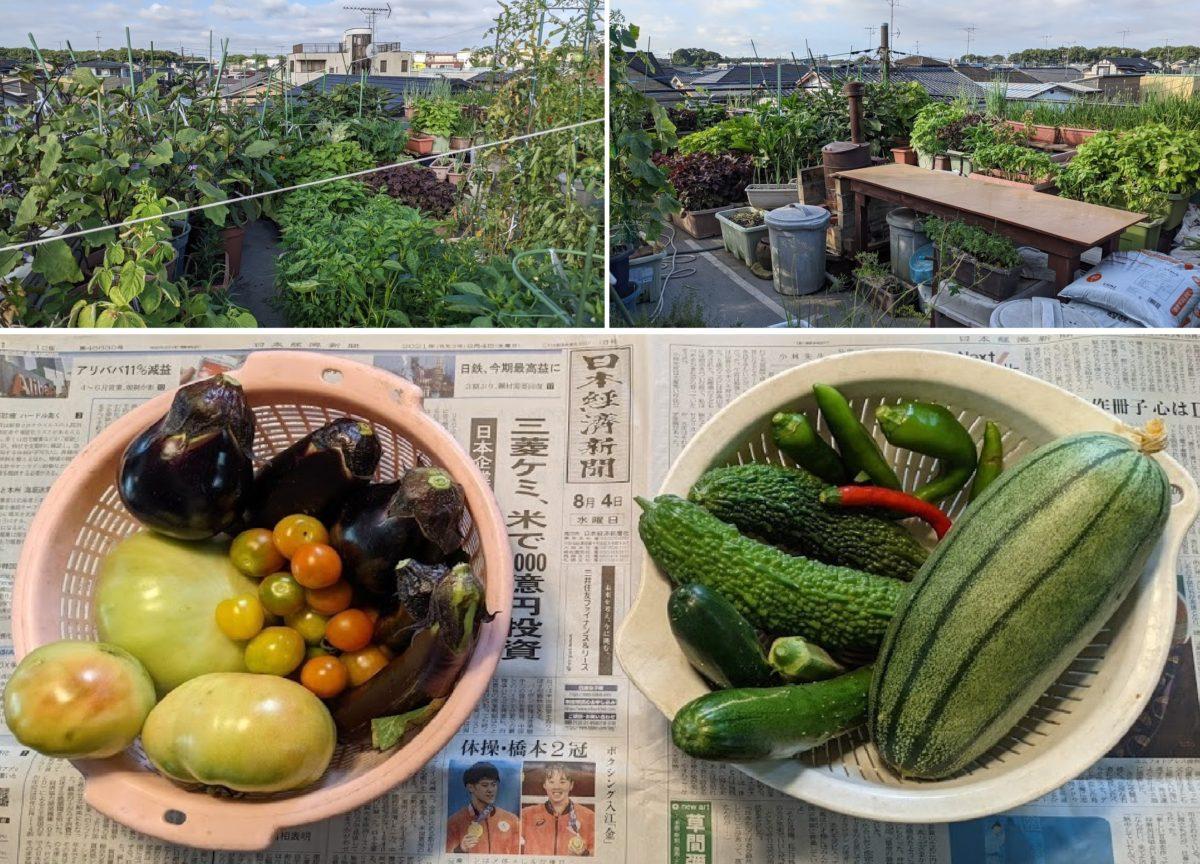 酷暑の中で頑張っている夏野菜たち!